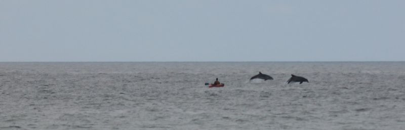 Delfines en la Playa de San Martín. Foto: Iñaki Arrate.